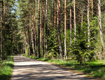 Small road leading through the forest. Stock Photo