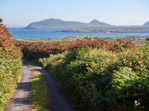Small road leading to the sea in Dingle, Ireland Stock Photos