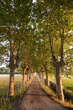 Small road lied with plane trees Stock Photos