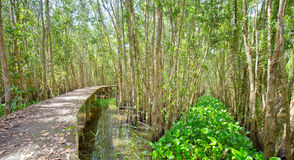 Small road through the mangrove forests Royalty Free Stock Photos