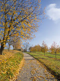 Small road through rural autumn tree landscape Stock Photo
