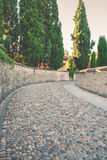 Small road of stones and cypresses Stock Images
