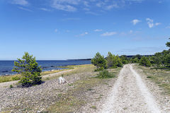 Small road. In the swedish landscape royalty free stock image
