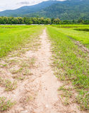 small road to the field Royalty Free Stock Images