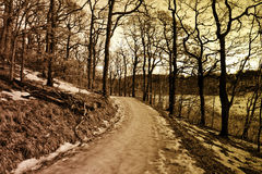 Small road in a wintry forest Royalty Free Stock Images