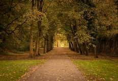 Small road in the wood royalty free stock photos