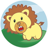 Small roaring lion with a mane Stock Photo