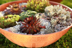 Small rock garden. Beautiful rock garden cultivated in small basin or roof gardening Stock Photo