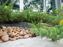 The small rock garden in front is the cement floor, the side is a small tree around Royalty Free Stock Photo