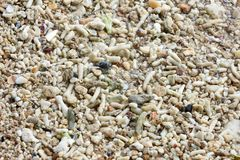 A small rock in with white sand on the coast stock photography