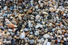 Small Rocks on a Rocky Beach.  Royalty Free Stock Image