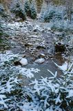Small rocky mountain stream in winter. Between snow covered pines Royalty Free Stock Photos