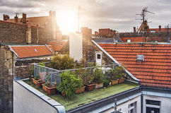 Small rooftop garden. With lots of potted plants on a sunny evening Royalty Free Stock Photography