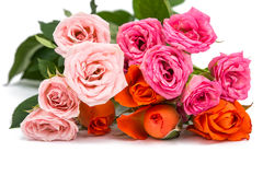 Small rose isolated Royalty Free Stock Photos