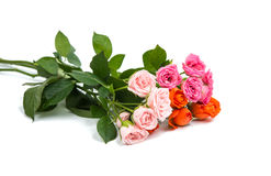 Small rose isolated Stock Photos