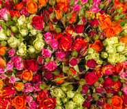 Small roses bouquet close up Stock Images