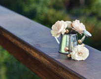Small roses in watering pot Stock Image