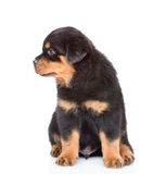 Small rottweiler puppy looking away.  on white background Stock Photo