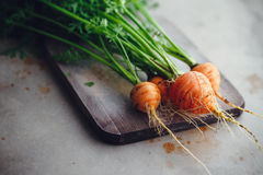 Small Round Carrots Royalty Free Stock Images
