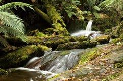 Small running creek Stock Photography
