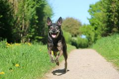 Small running dog on the street stock photography