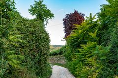 Small rural road in Italy. With stone walls cover in vegetation stock photography