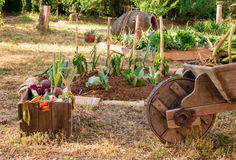 Small and rustic vegetable garden Royalty Free Stock Photos