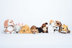 Small sad russet dogs in a row of toys Royalty Free Stock Image