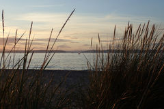 Small sail boats on the sea, on a summers evening, viewed thought the beach grass. Small sail boats on the Moray Firth, on a summers evening. Viewed thought the Stock Photography