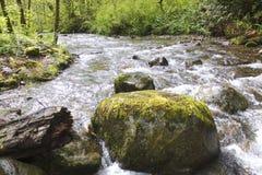 Small Salmon Stream Royalty Free Stock Image