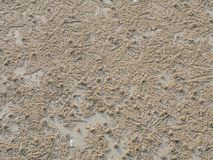 Small Sand Balls, Sand crab Which Burrows Holes in the sand Beach. Small sand balls, Sand crab which is burrows holes in the sand beach Royalty Free Stock Photos