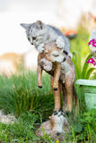 Small sand-colored kitten on green grass stock images