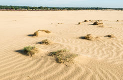 Small sand drifts in a nature reserve Stock Image