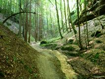 Small sandy road through a green forest Royalty Free Stock Photography