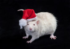Small Santa Claus Royalty Free Stock Image