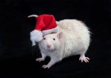 Small Santa Claus Royalty Free Stock Image