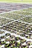 Small saplings Royalty Free Stock Photography