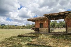 Small Sardinian horses shelter from the sun under an old structure in a Mediterranean rural landscape stock photography