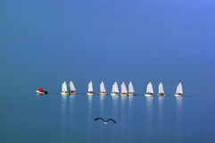 Small school of sailing Royalty Free Stock Image