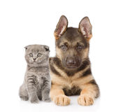 Small scottish cat and german shepherd puppy dog looking at camera. isolated on white.  Stock Photos
