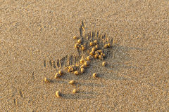 A small sea crab made it. Sand ball made by small sea crab Stock Images