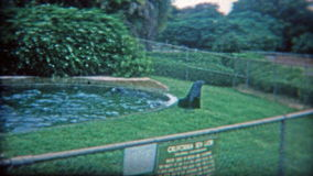 1973: Small sea lion habitat with tiny fence to jump over. WASHINGTON DC stock video footage