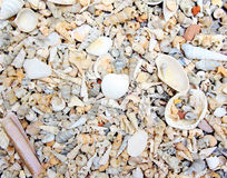 Small sea Shell background Royalty Free Stock Photos