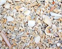 Small sea Shell background Royalty Free Stock Photos