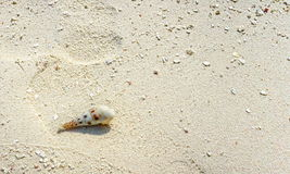 Small sea shell lying on a sandy beach Stock Photos