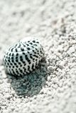 Small sea shell on a the shore of a beach Royalty Free Stock Photography