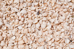 Small sea shells. At the beach in Thailand Royalty Free Stock Photo