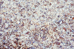 Small sea shells texture background. Selective focus; toned image Stock Image