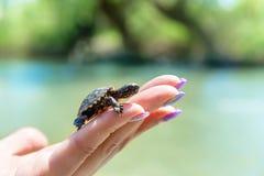Small sea turtle Royalty Free Stock Photos