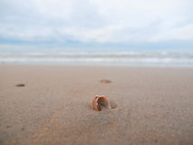 Small seashell on the beach Stock Photography